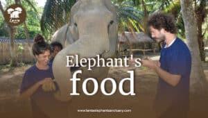 elephants-food