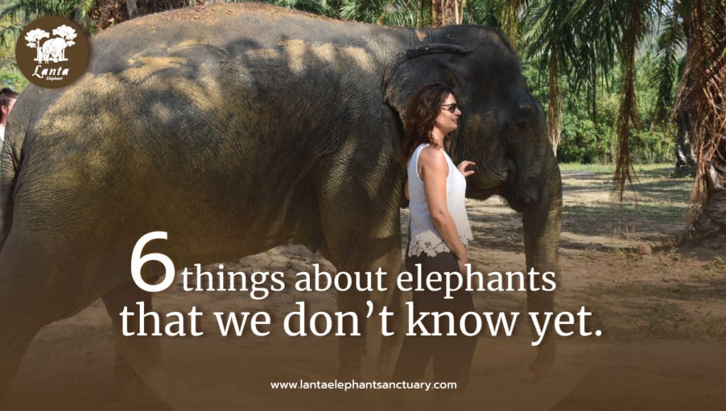 elephant is a remarkable animal in terms