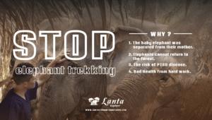 Stop elephant trekking