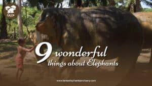 9 wonderful Elephants