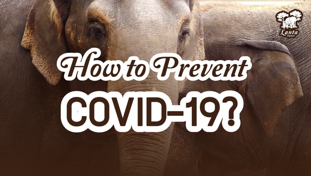 How to Prevent COVID-19?